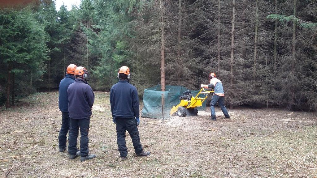 Chainsaw Training from Rylands Horticulture