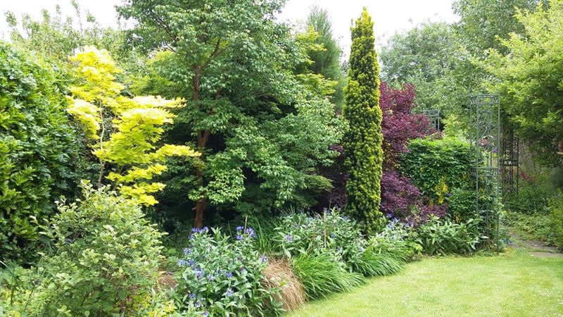 Shrubs and borders