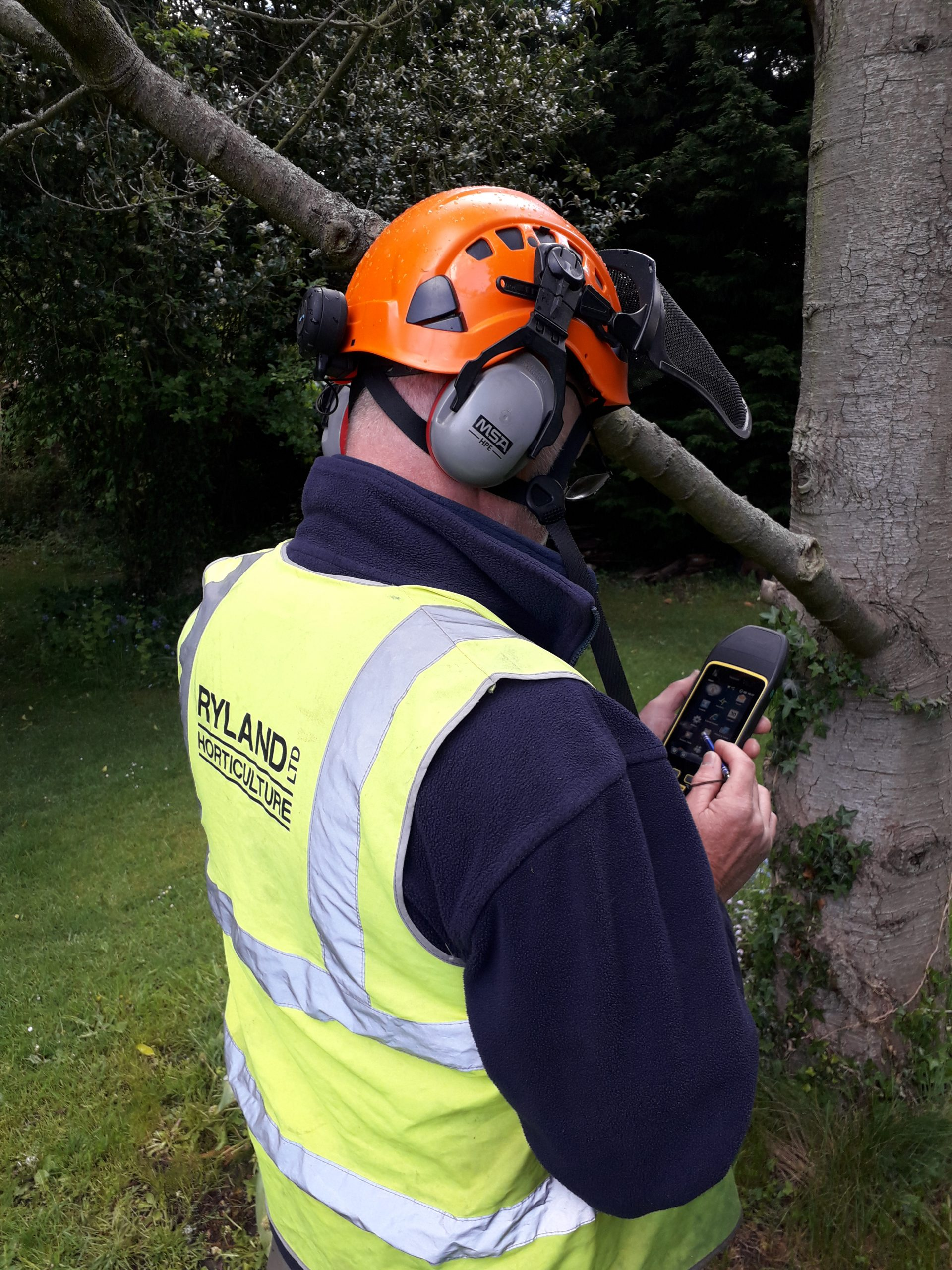 Arboricultural Advisory and Consultancy Services